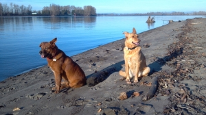 My Dogs: Lonnie and Clyde at Kelly Point Park
